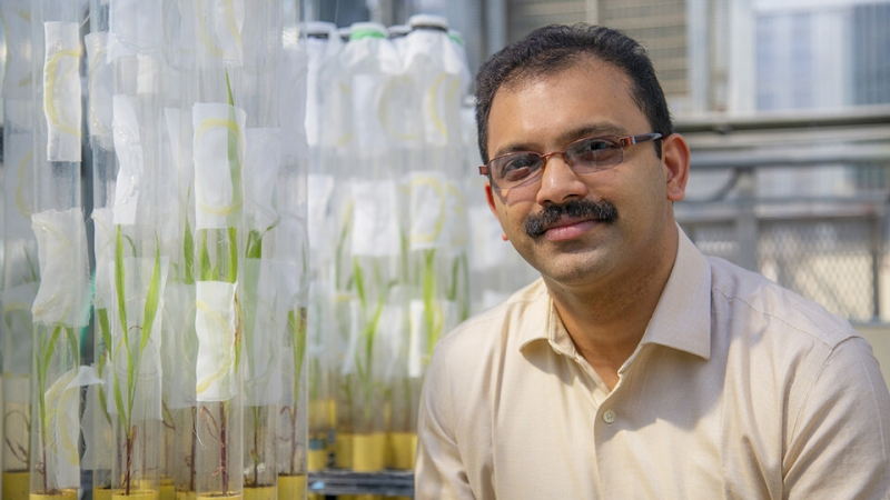 Louis receives grant to research sorghum's resistance to fall armyworm