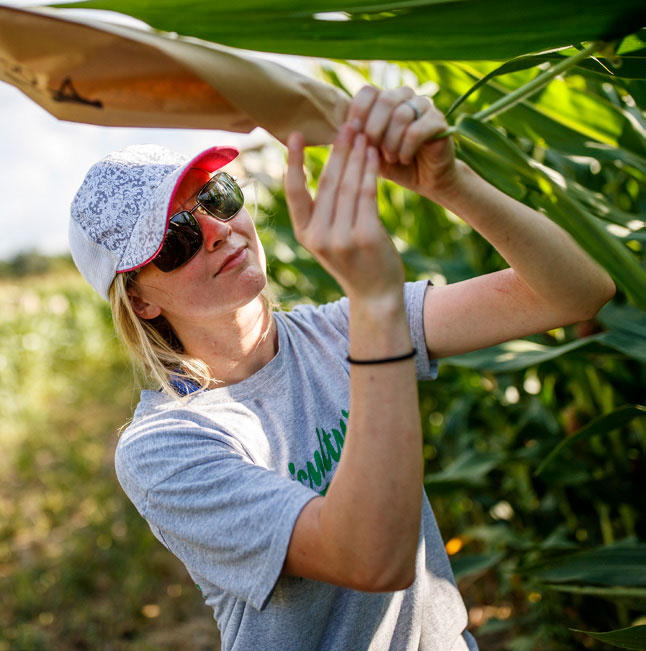 Student examining a corn leaf in a field