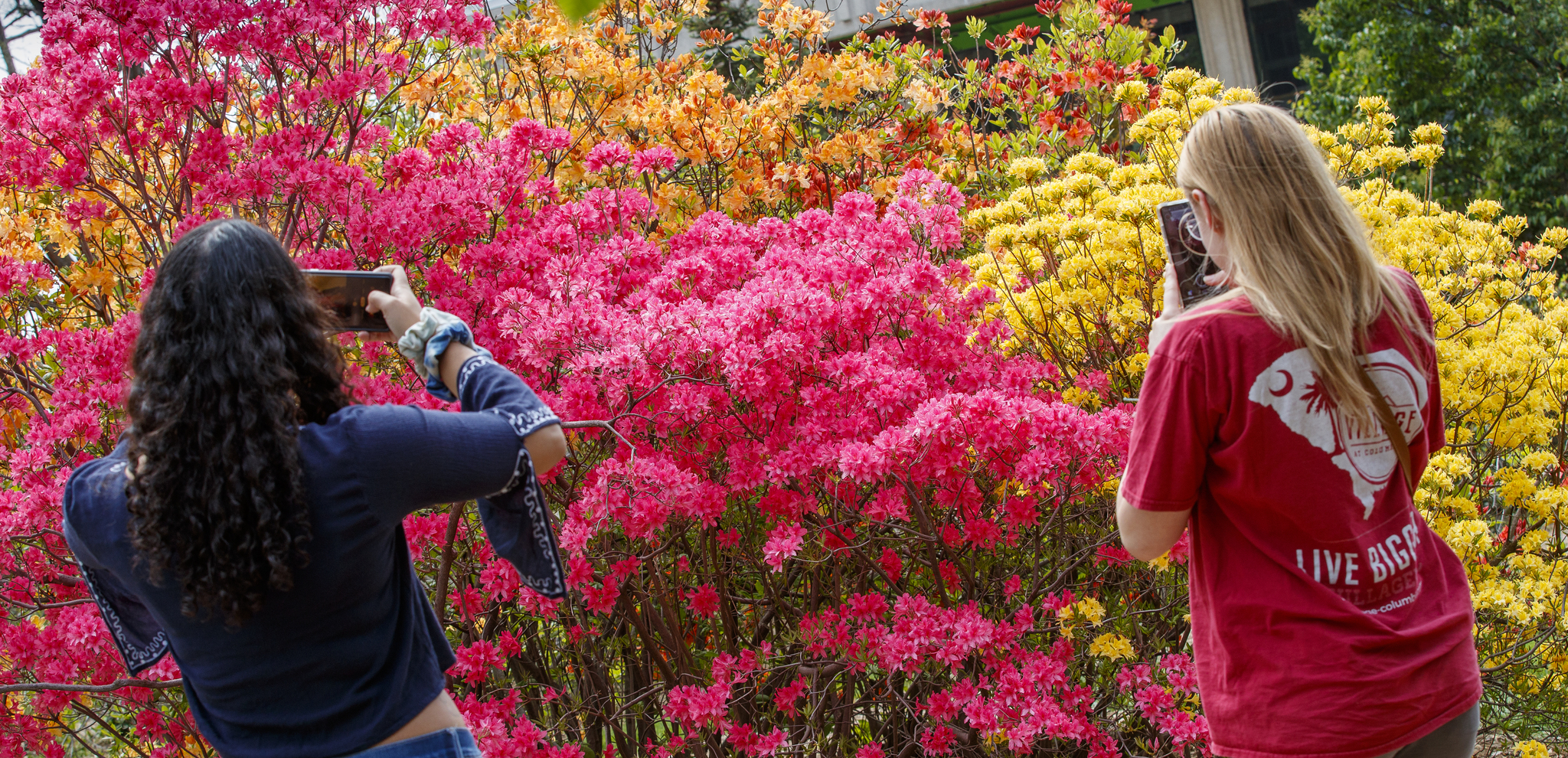 Female students take photos on their phone of the colorful spring blooms on campus