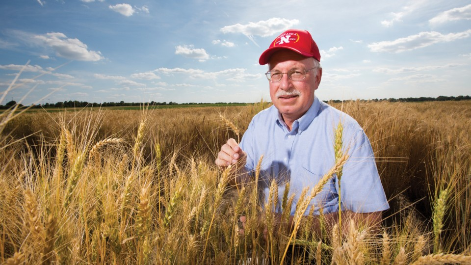 Stephen Baenziger stands in a field of golden wheat with his Nebraska baseball cap and blue skies behind him