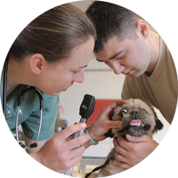 Pre-Veterinary Medicine students with animal