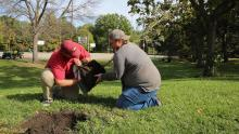 Two male students plant a tree near the East Campus basketball courts