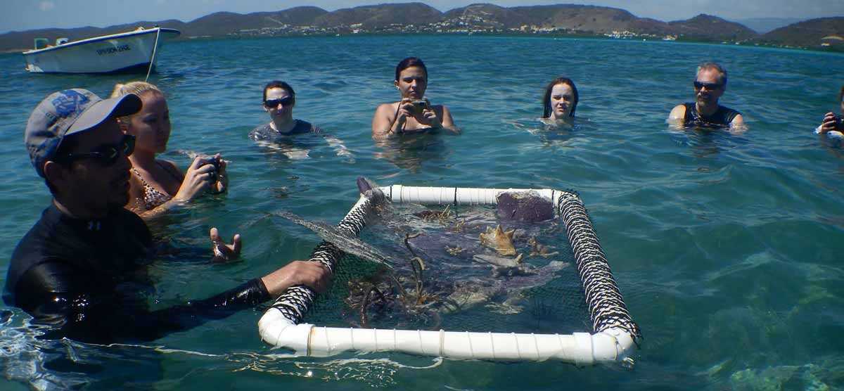 students in water with net